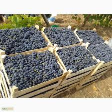 Покупаем виноград Молдова оптом от 20т