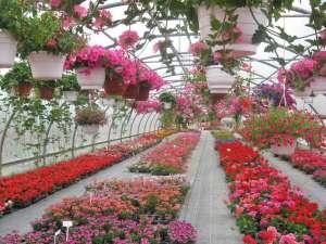 Plantarea florilor și arbuștilor deorativi. German