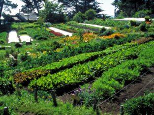Muncă în cîmp la plantarea și cultivarea legumelor