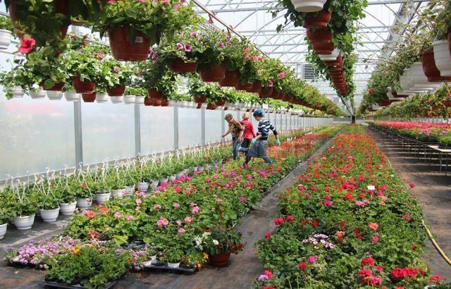 Cultivarea florilor și arbuștilor decorativi