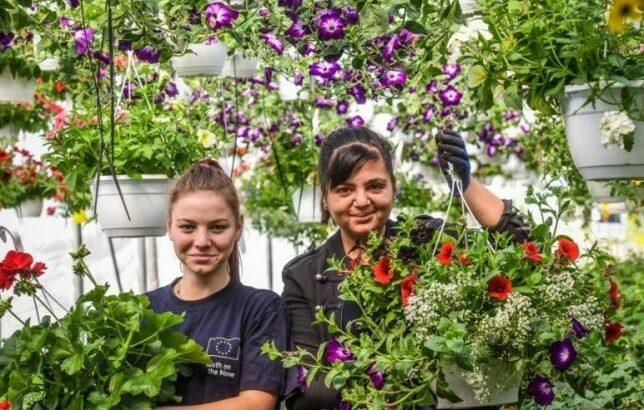 Cultivarea florilor
