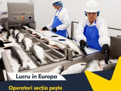 Angajăm personal necalificat la muncă în Europa !