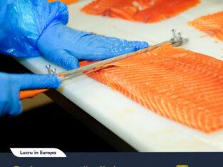 Muncitori pentru fabrica de pește roșu !!