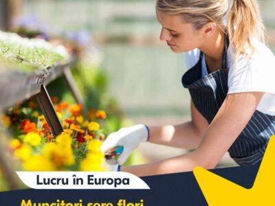 Muncitori la cultivarea florilor în Germania!