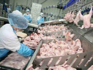 Muncitori la combinate de carne