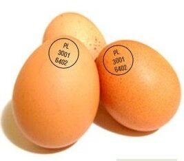 Инкубационные яйца гусей маркерованные