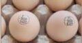 Ouă de gâscă marcate
