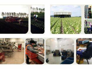 Muncitori necalificaţi în cadrul serelor legume !
